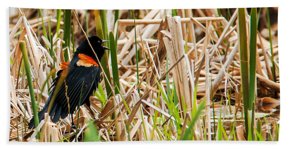 Wildlife Beach Towel featuring the photograph Red-wing Hiding by Edward Peterson