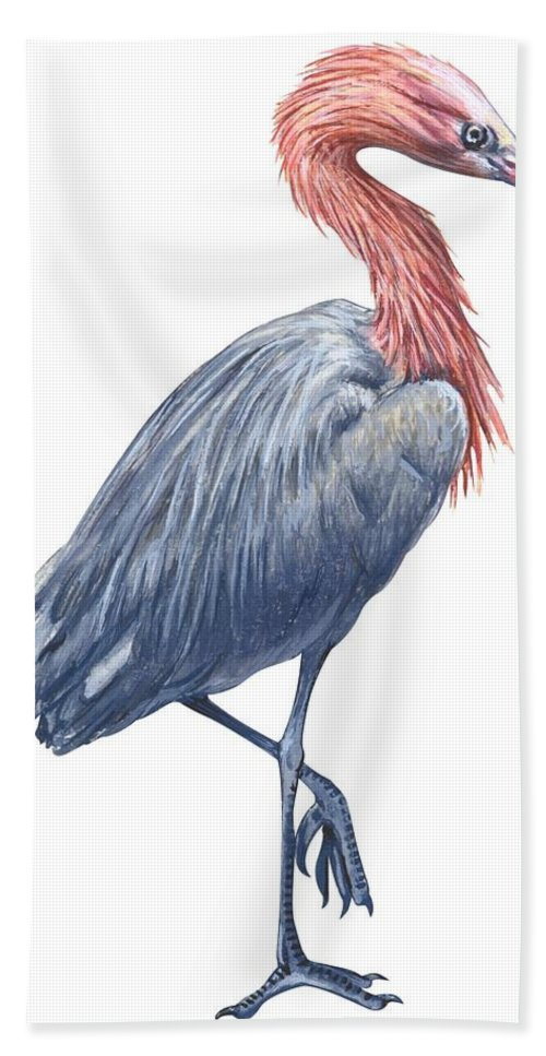 No People; Vertical; Side View; Full Length; White Background; One Animal; Wildlife; Close Up; Zoology; Illustration And Painting; Bird; Beak; Feather; Standing On One Leg; Reddish Egret; Egretta Rufescens Beach Towel featuring the drawing Reddish Egret by Anonymous