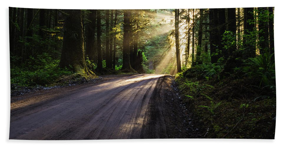 God Rays Beach Towel featuring the photograph Redwood Magic by Vishwanath Bhat