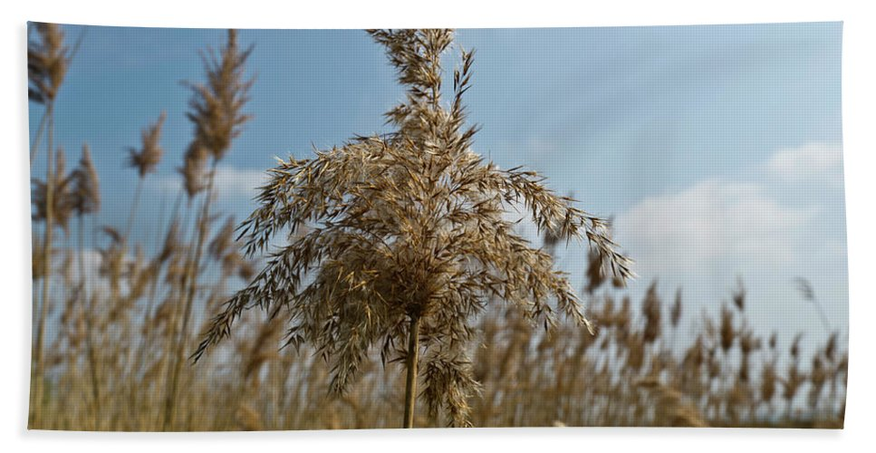Reeds Beach Towel featuring the photograph Reeds by Gary Eason
