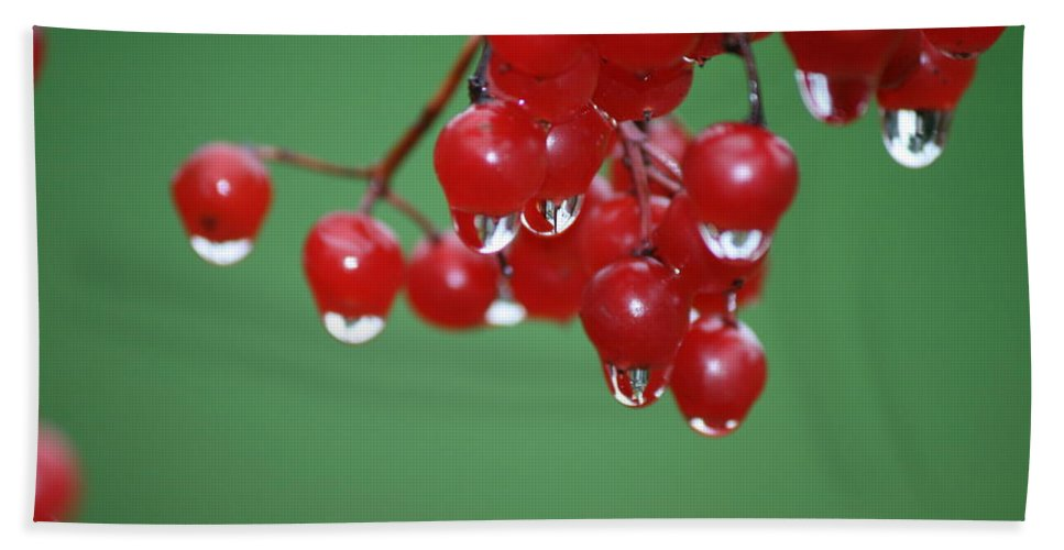 Berry Beach Towel featuring the photograph Reflective Red Berries by Neal Eslinger