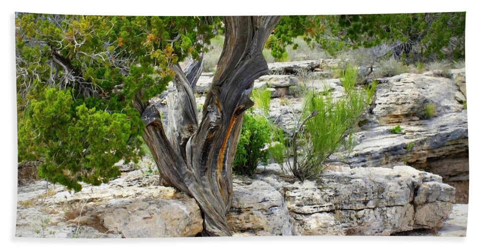 Tree Beach Towel featuring the photograph Resilient Tree by Carol Groenen