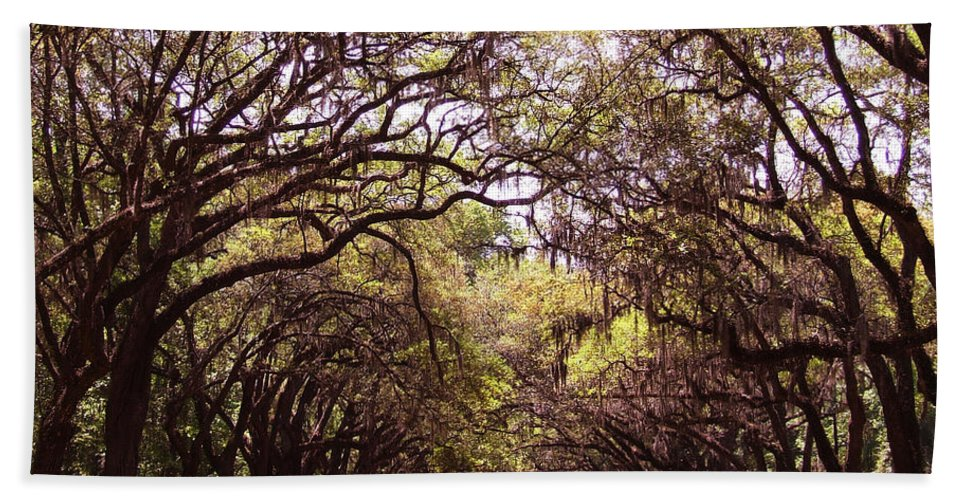 Tree Beach Towel featuring the photograph Road Of Trees by Andrea Anderegg
