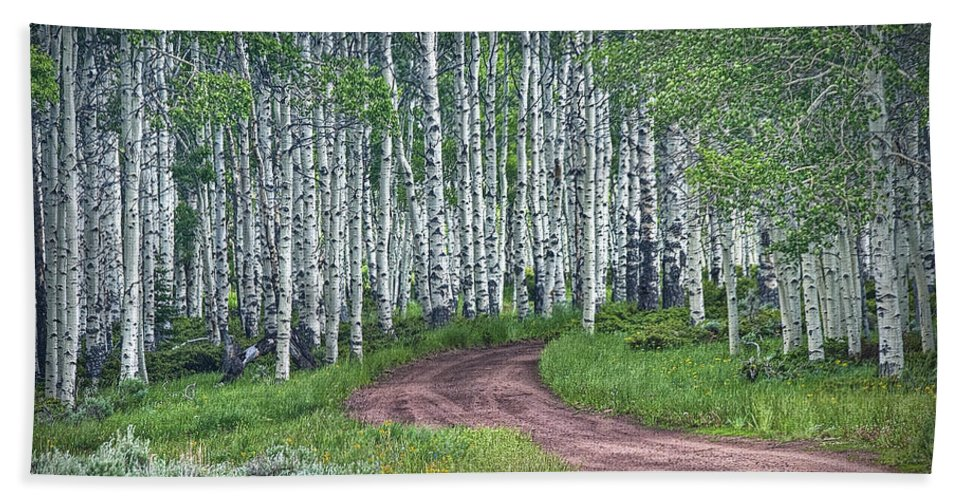 Art Beach Towel featuring the photograph Road Through A Birch Tree Grove by Randall Nyhof