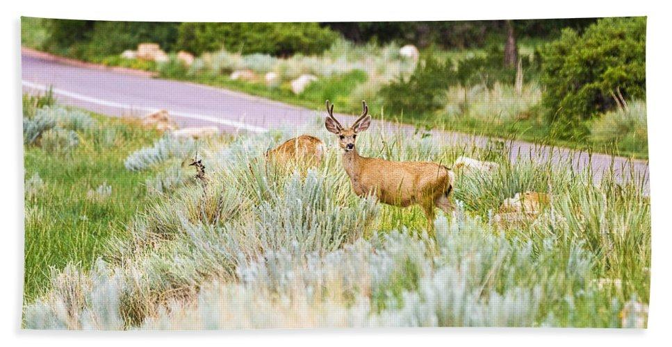 Colorado Beach Towel featuring the photograph Roadside Buck by Scott Pellegrin