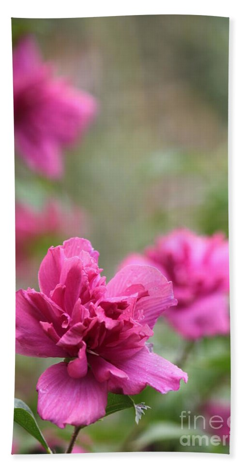 Flora Beach Towel featuring the photograph Romantically Pink by Jennifer E Doll