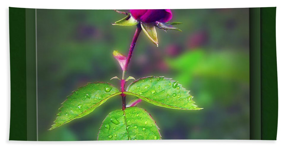 2d Beach Towel featuring the photograph Rose Bud by Brian Wallace