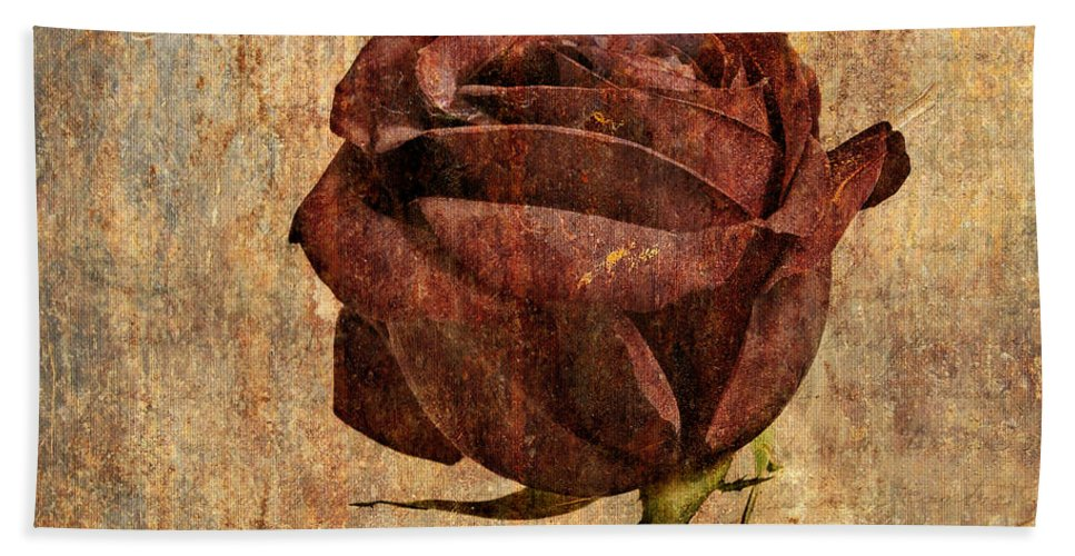 Rose Beach Towel featuring the photograph Rose En Variation - S22ct05 by Variance Collections