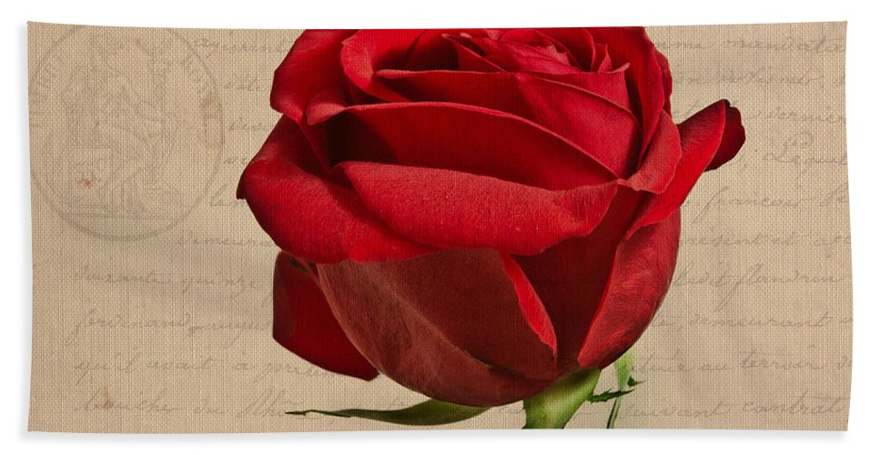 Rose Beach Towel featuring the photograph Rose En Variation - S2at03a by Variance Collections