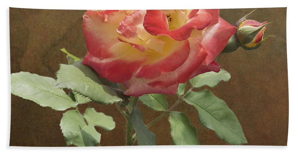 Rose Beach Towel featuring the photograph Rose On Thornridge Road by Michael Peychich
