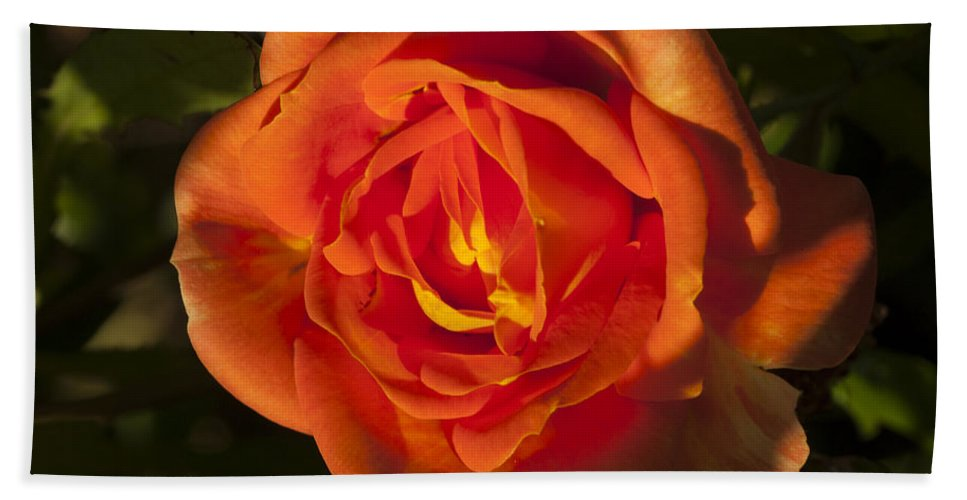 Rose Beach Towel featuring the photograph Rose Orange by Richard Thomas