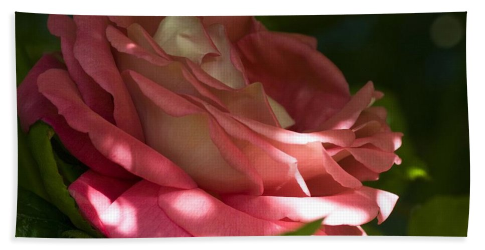 Rose Beach Towel featuring the photograph Rose Pink by Richard Thomas