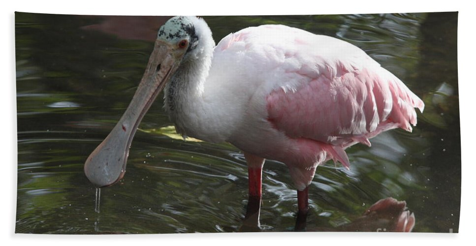 Roseate Spoonbill Beach Towel featuring the photograph Roseate Spoonbill by Christiane Schulze Art And Photography