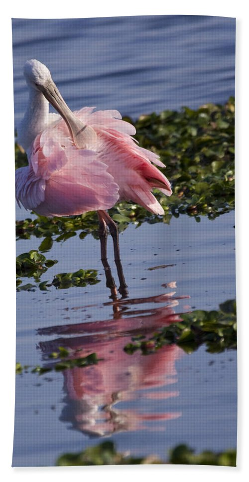 Roseate Beach Towel featuring the photograph Roseate Spoonbill by Sandy Swanson