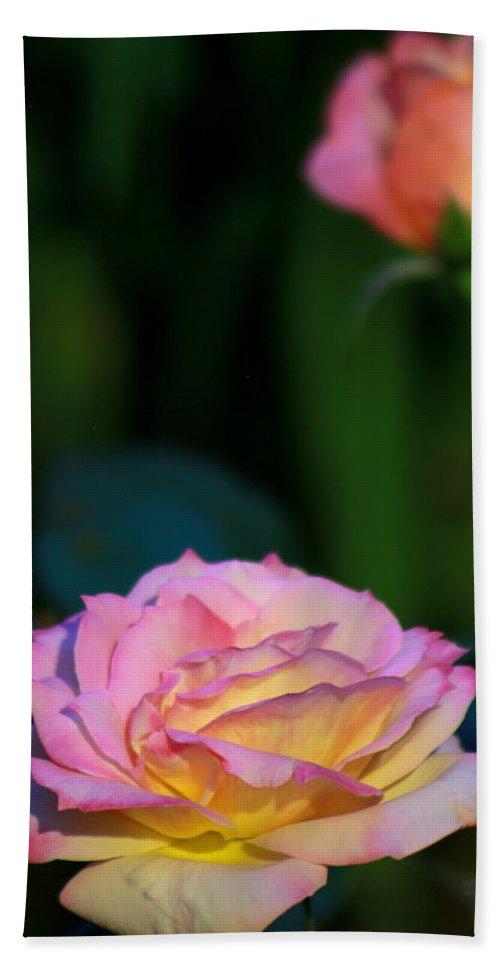 Rose Beach Towel featuring the photograph Roses by Deborah Crew-Johnson