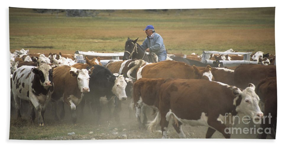 Cowboy Beach Towel featuring the photograph Cattle Round Up Patagonia by James Brunker