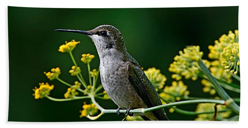 Bird Beach Towel featuring the photograph Ruby Throated Hummingbird 1 by John Absher