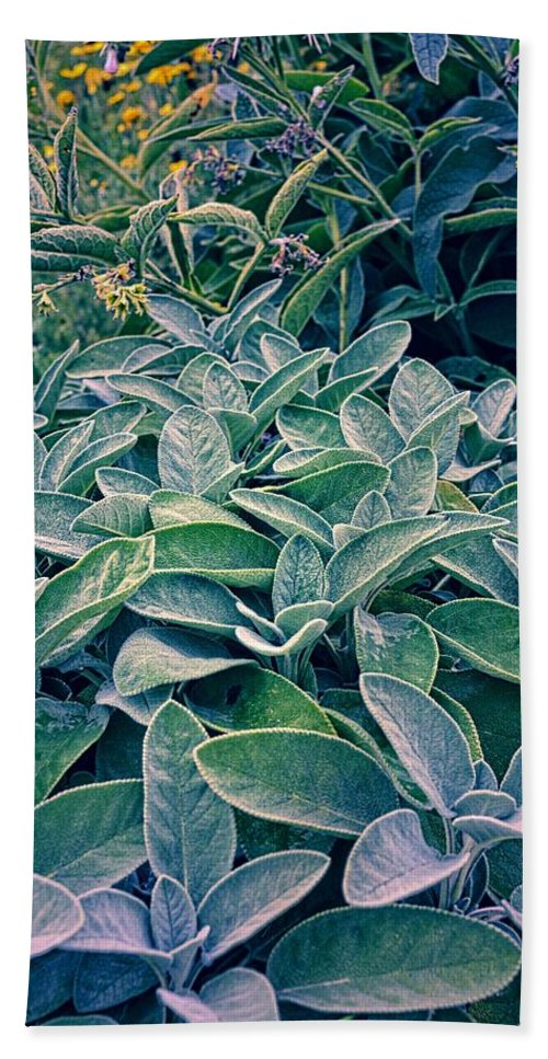 Sage Leaf Beach Towel featuring the photograph Sage In The Garden by Michelle Calkins