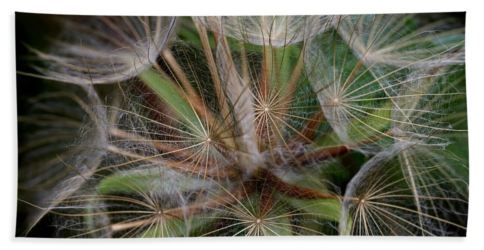 Salsify Beach Towel featuring the photograph Salsify Seeds - 1 by Kenny Glotfelty