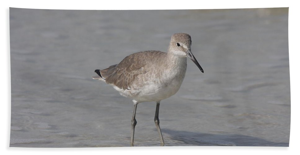 Sandpiper Beach Towel featuring the photograph Sandpiper by Christiane Schulze Art And Photography