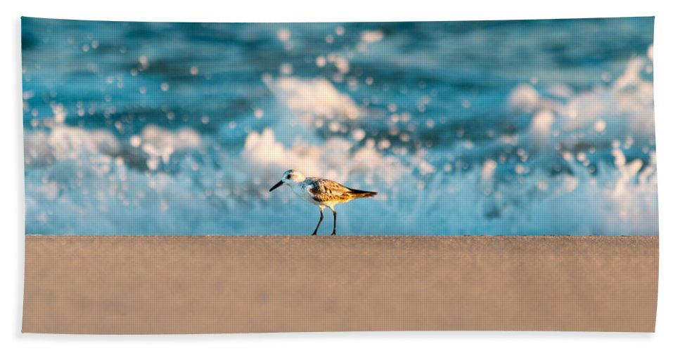 Beach Beach Towel featuring the photograph Sandpiper by Gaurav Singh
