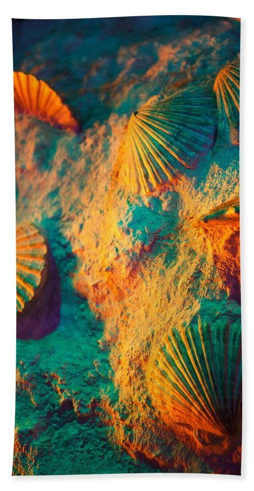 Isolated Objects Beach Towel featuring the photograph Sandy Shells by FL collection