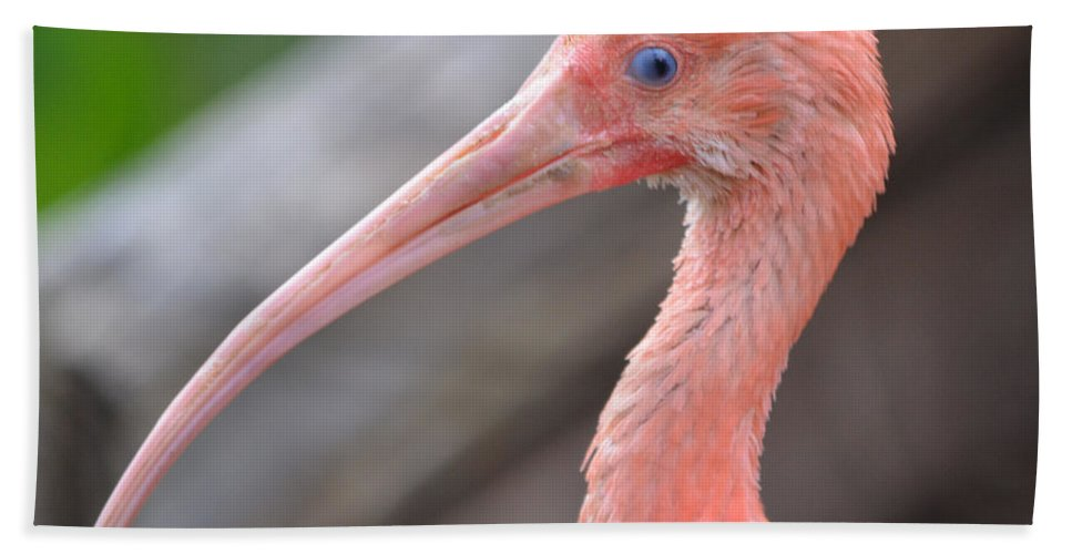 Ibis Beach Towel featuring the photograph Scarlet Ibis 1 by Richard Bryce and Family