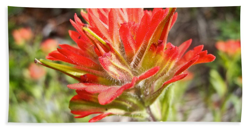 Scarlet Paintbrush Beach Towel featuring the photograph Scarlet Paintbrush Along John's Lake Trail In Glacier Np-mt by Ruth Hager