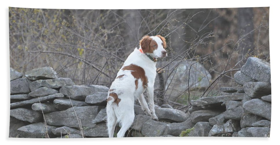 Brittney Beach Towel featuring the pyrography Scout by Sally Rice