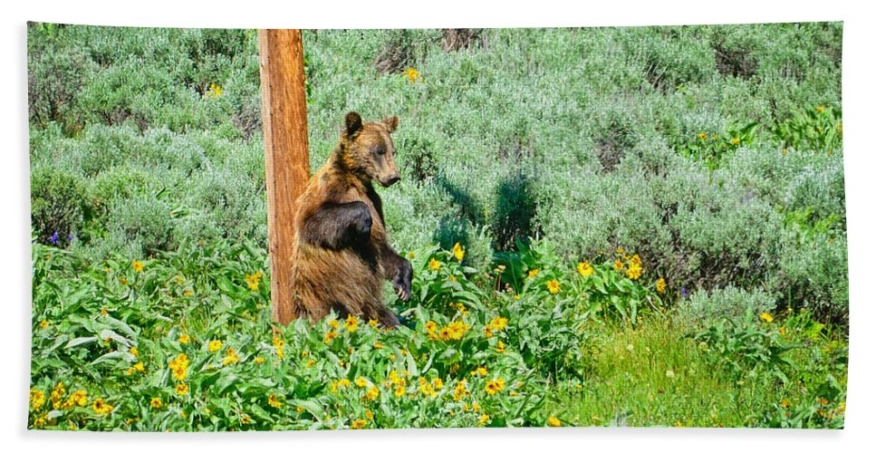 Grizzly Beach Towel featuring the photograph Scratch That Itch by Greg Norrell