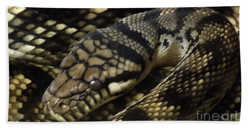 Snakes Beach Towel featuring the photograph Scrub Python Abstraction by Sara Raber