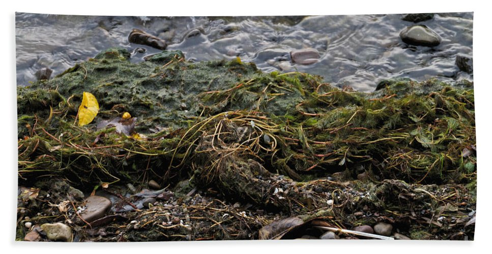 Green Beach Towel featuring the photograph Sea Weed by William Norton