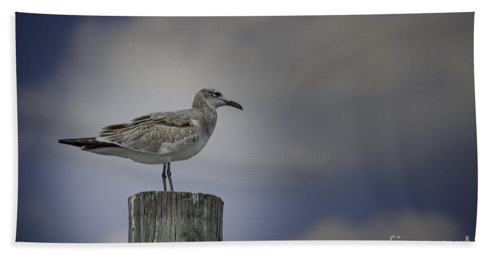 Bird Beach Towel featuring the photograph Seagull by Dale Powell