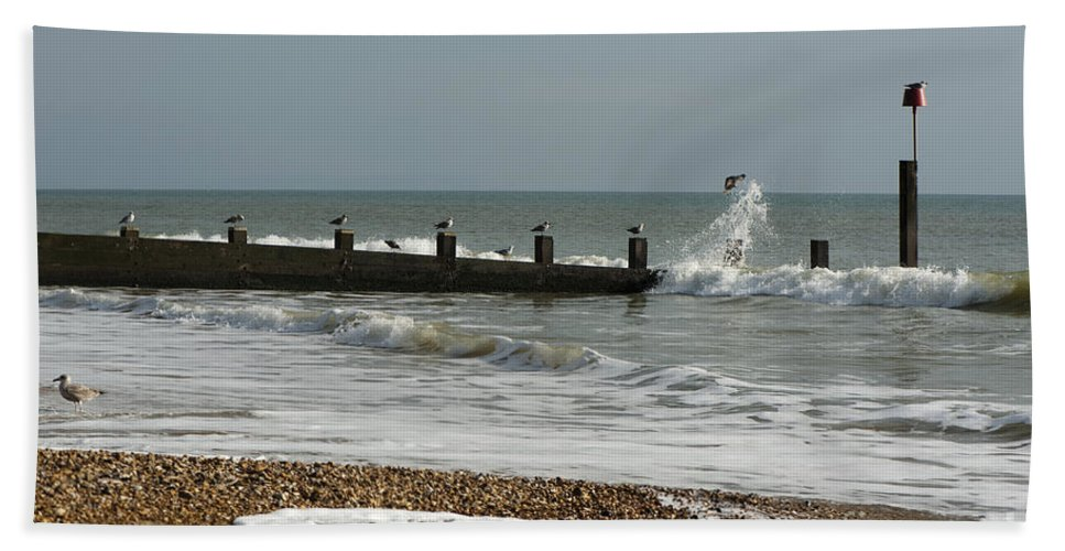 Autumn Beach Towel featuring the photograph Seagull Groyne by Anne Gilbert