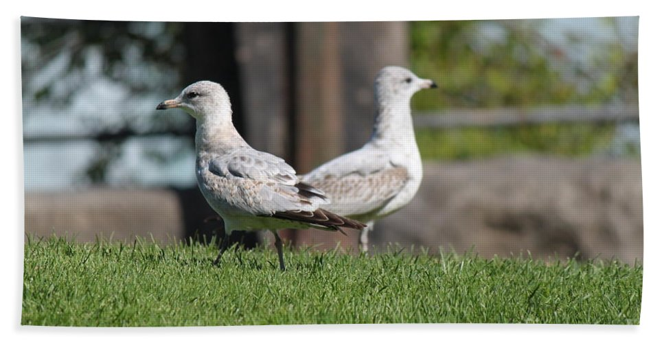 Seagull Beach Towel featuring the photograph Seagull Opposites by Jennifer E Doll