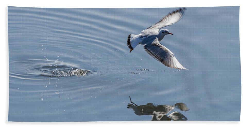 Animal Beach Towel featuring the photograph Seagull Reflection by Paulo Goncalves