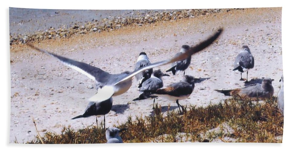 Lazy Days In Sunny Florida Beach Towel featuring the photograph Seagulls by Robert Floyd