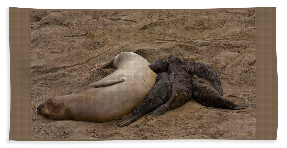 Beach Beach Towel featuring the photograph Seal And Pups by Beth Sargent