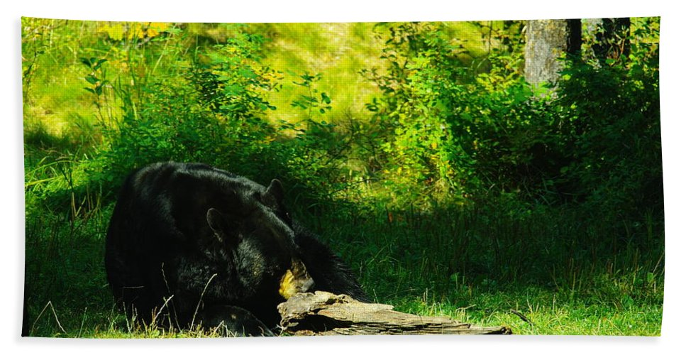 Bears Beach Towel featuring the photograph Searching For That Last Termite by Jeff Swan