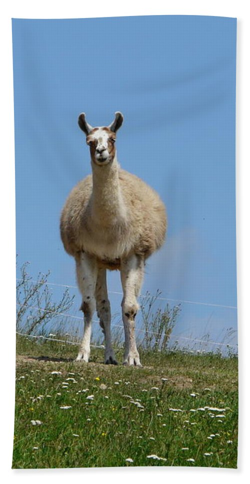 Lama Beach Towel featuring the photograph Sentinel by Valerie Ornstein