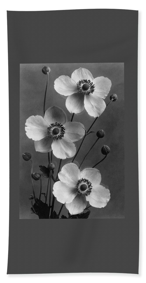 Flowers Beach Towel featuring the photograph September Charm Anemones by J. Horace McFarland