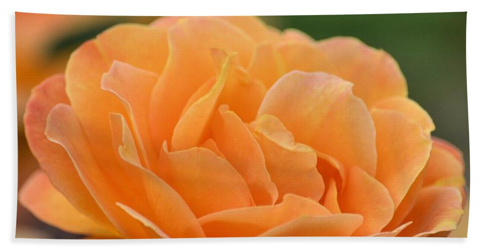 September Rose Beach Towel featuring the photograph September Rose by Maria Urso