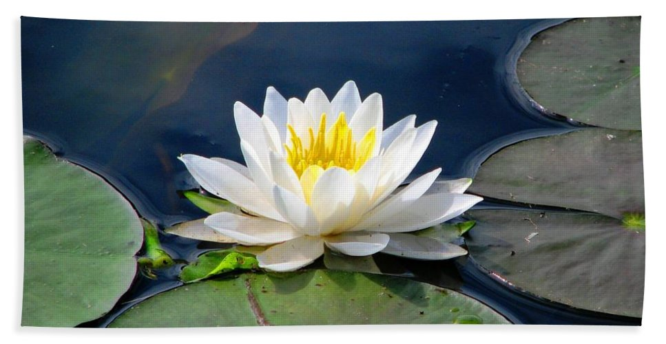 Water Lilies Beach Towel featuring the photograph Serenity On The Lily Pond by Angela Davies