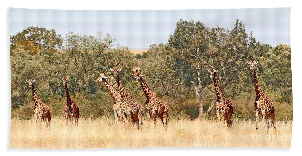 Masai Mara Beach Towel featuring the photograph Seven Masai Giraffes by Liz Leyden