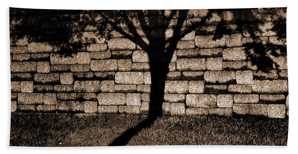 Tree Beach Towel featuring the photograph Shadow Tree by Karen Adams