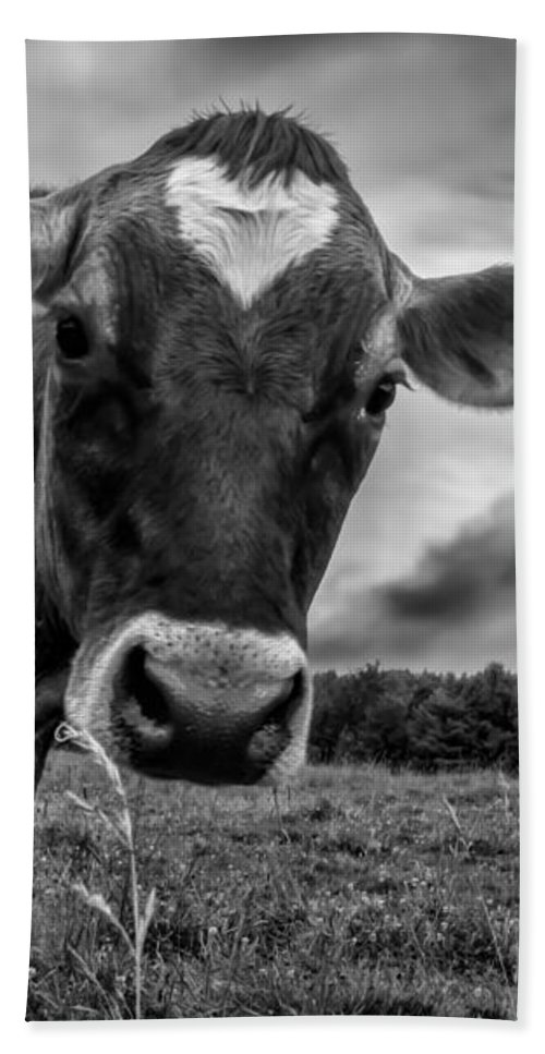 Cows Beach Towel featuring the photograph She Wears Her Heart For All To See by Bob Orsillo