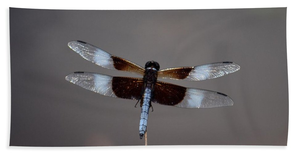 Shimmering Widow Skimmer Beach Towel featuring the photograph Shimmering Widow Skimmer by Maria Urso