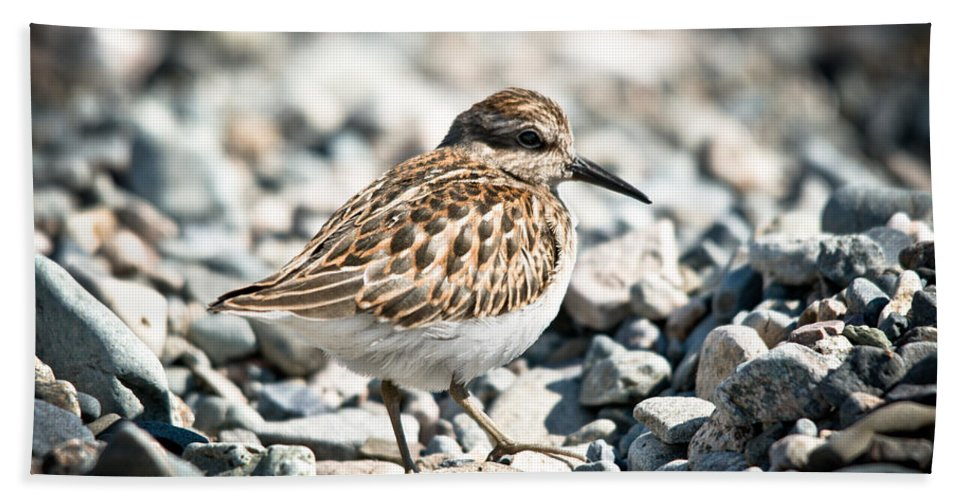 Beach Towel featuring the photograph Shorebird Beauty by Cheryl Baxter