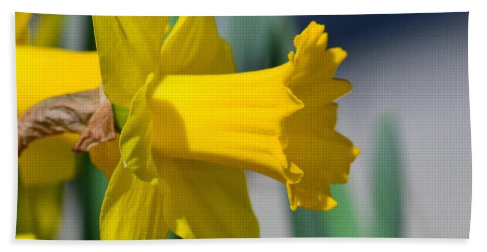 Shout Out To Spring Beach Towel featuring the photograph Shout Out To Spring by Maria Urso