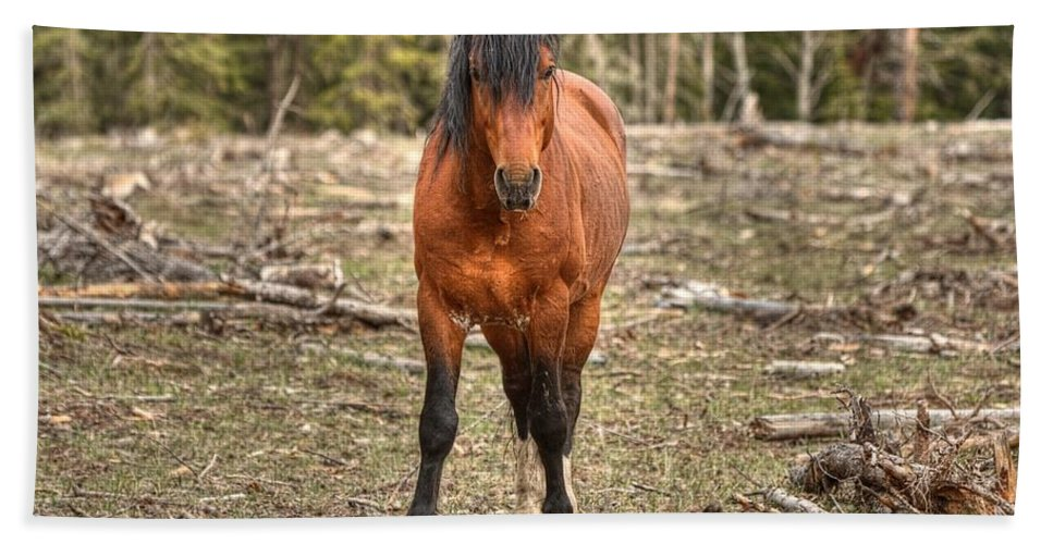 Wild Horse Beach Towel featuring the photograph Show Down At Sun Down by James Anderson